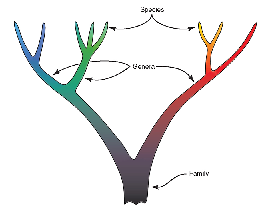 Traditional family tree