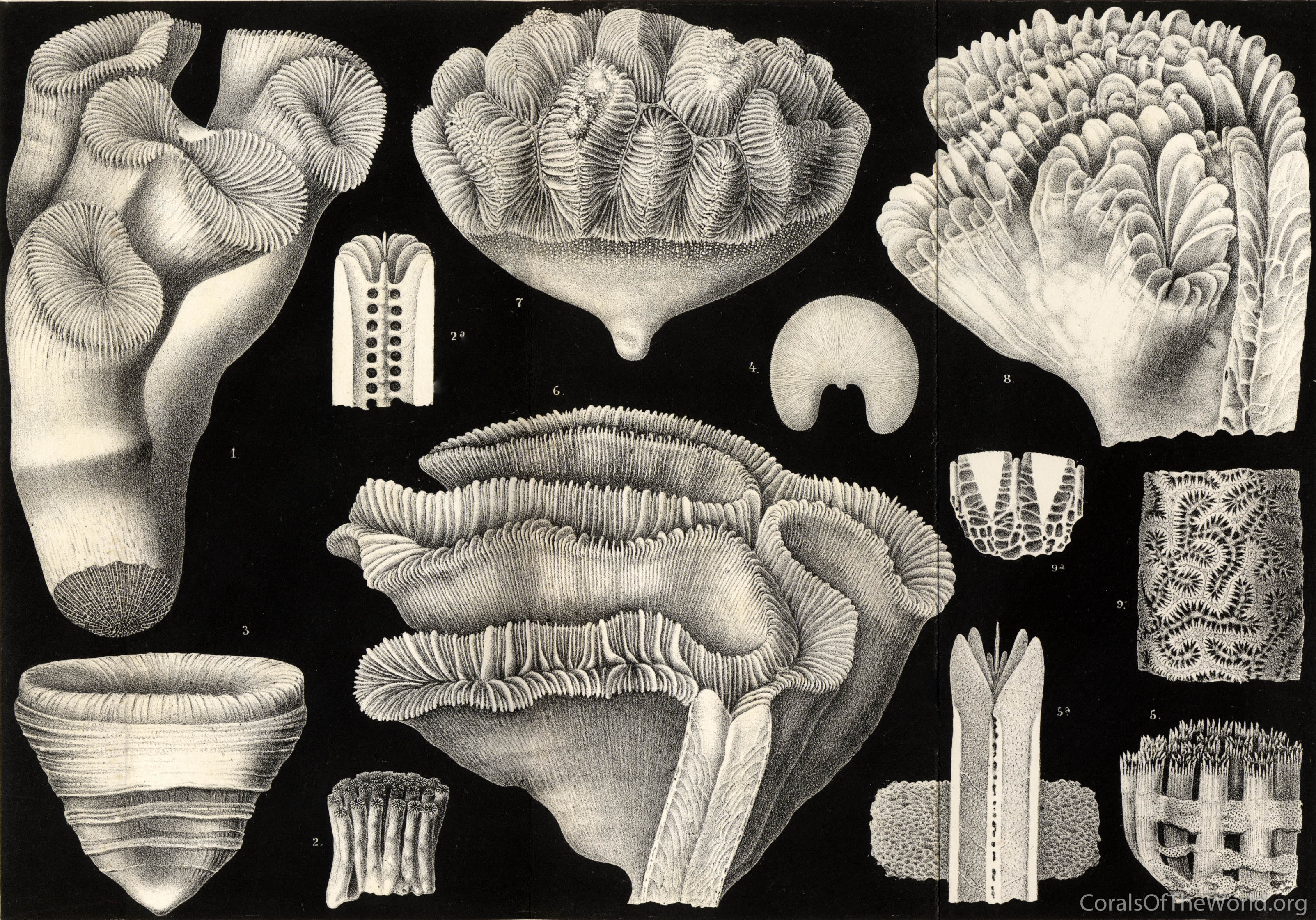 Quality artwork of corals